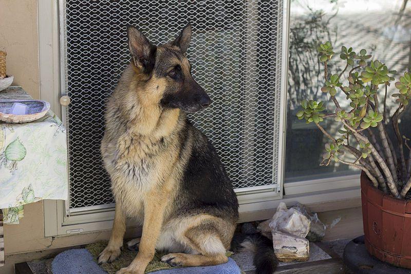 Meu cachorro fica apavorado com esses FOGOS [vai, pode xingar, ninguém tá vendo! rs]. E agora?