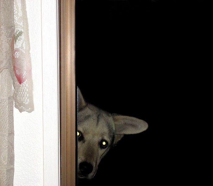 Convidei todo mundo e esqueci de perguntar a opinião do meu cachorro. E agora?