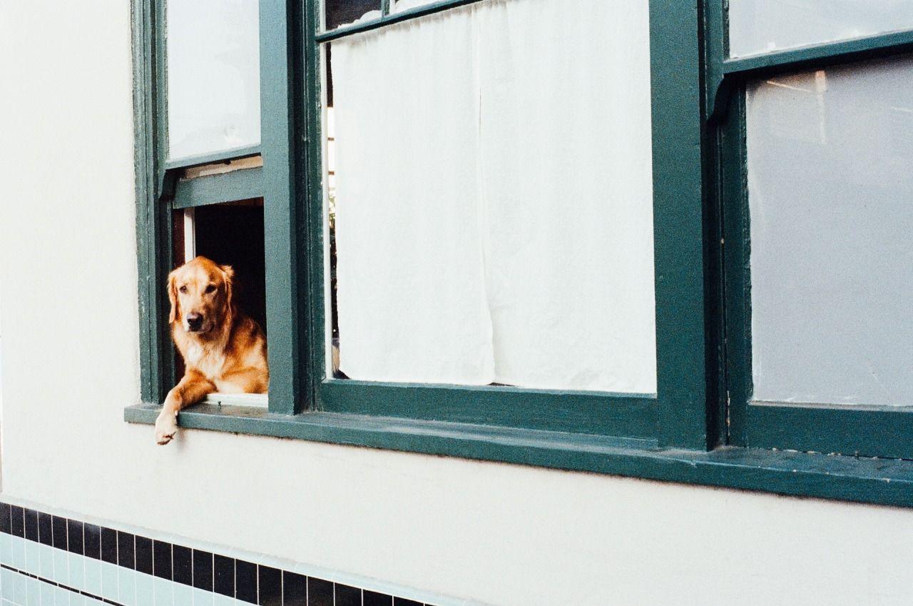 Vou viajar, mas meu cachorro vai ficar. E agora?
