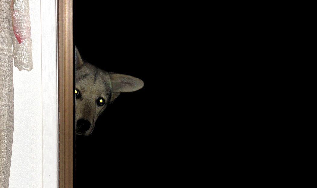 2. Convidei todo mundo e esqueci de perguntar a opinião do meu cachorro. E agora?