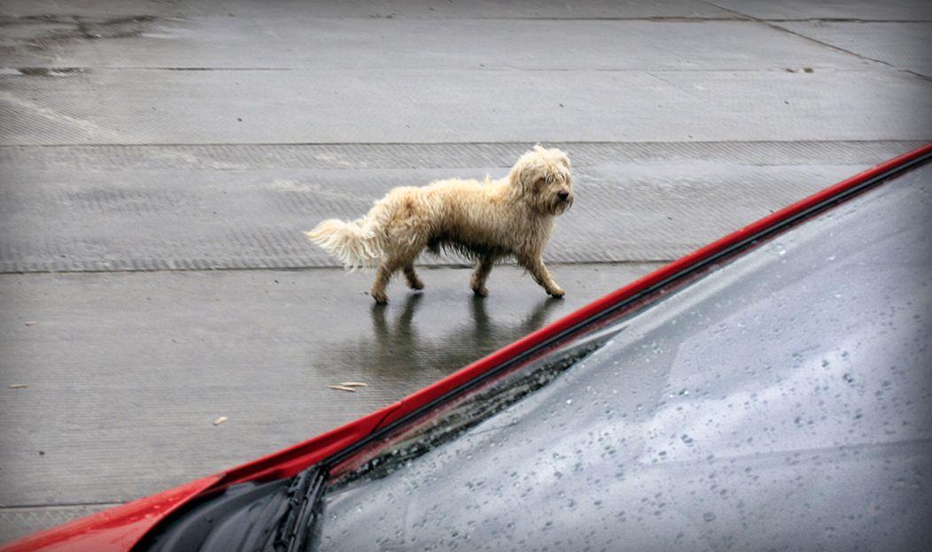 4. Encontrei um cãozinho perdido! E agora?