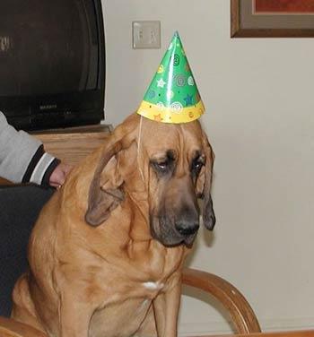 Todos foram convidados para as festas, menos o meu cão. E agora?