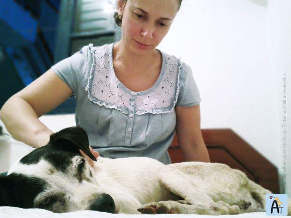 Cães idosos utilizam a massoterapia canina como terapia complementar