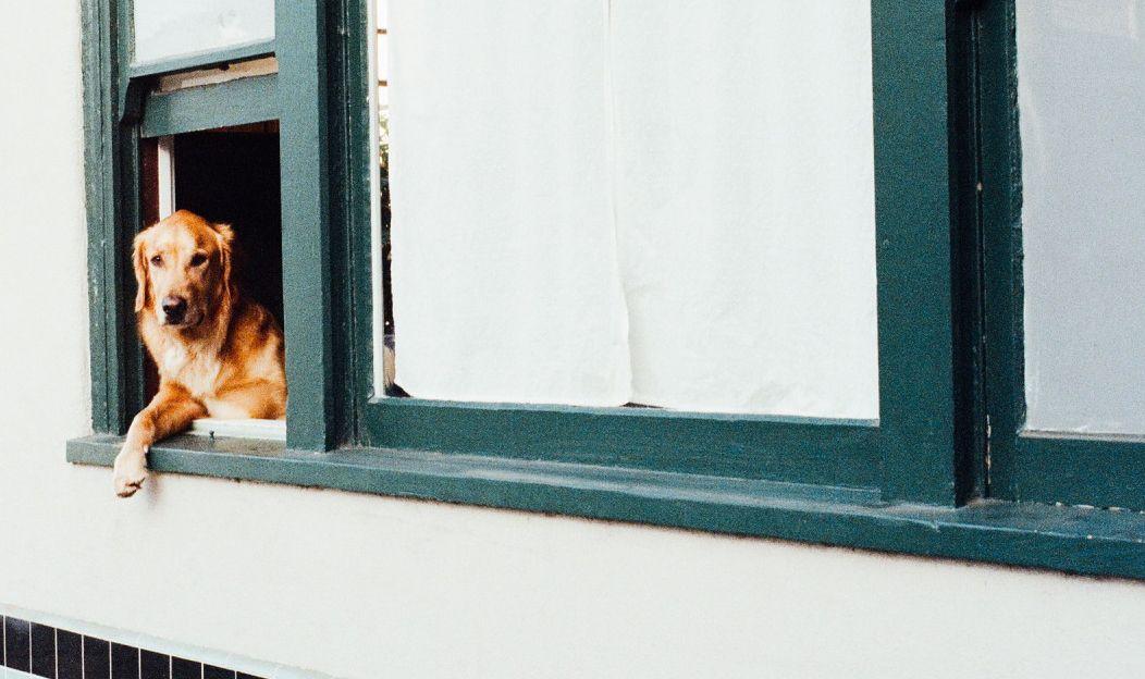 1. Vou viajar, mas meu cachorro vai ficar. E agora?