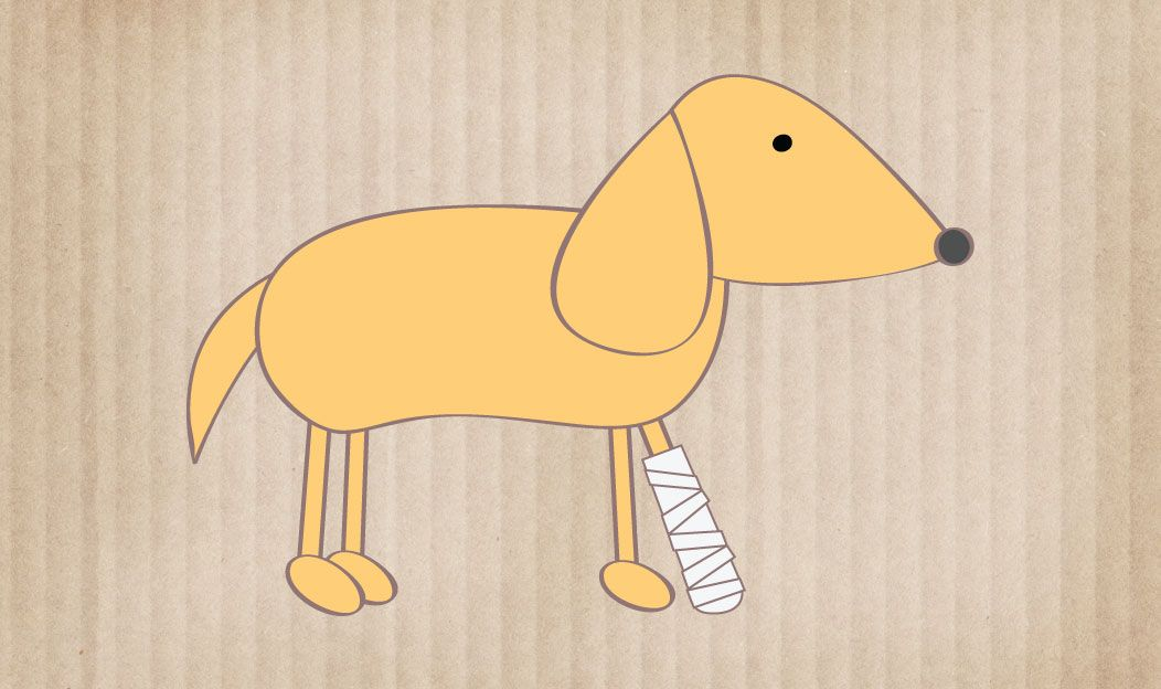 O cão no pós-cirúrgico