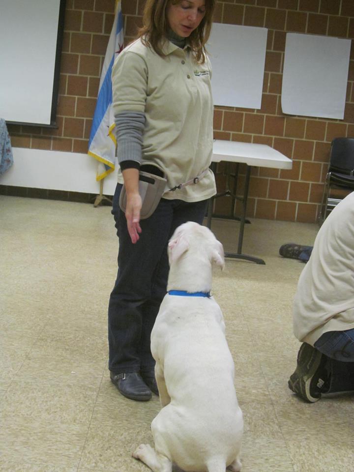 A massoterapia canina em outros países