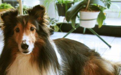 Massoterapia canina: por uma vida mais saudável e equilibrada para os cães!