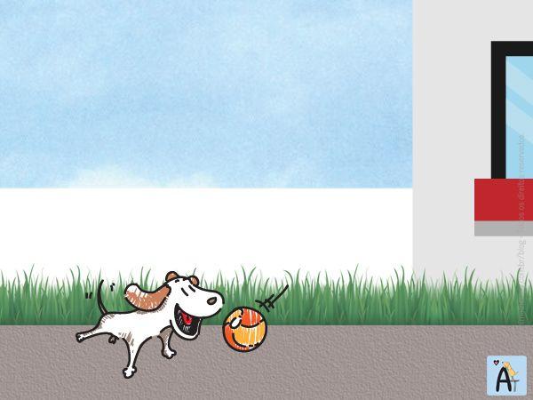 Seu cão ficará longe de você nas férias? Conheça uma alternativa para minimizar os efeitos da ansiedade da separação!
