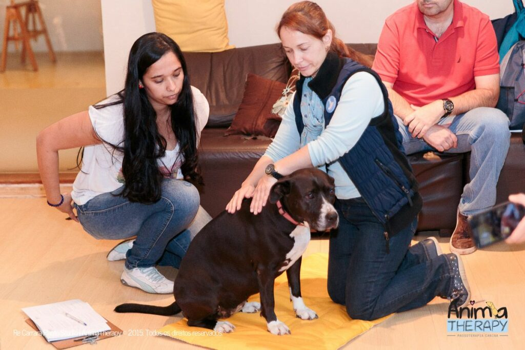 Massagem relaxante para cães