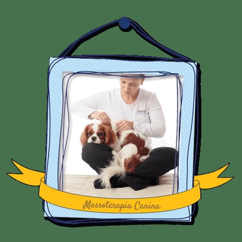 massoterapia canina
