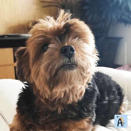 Lulu - Família AnimaTherapy