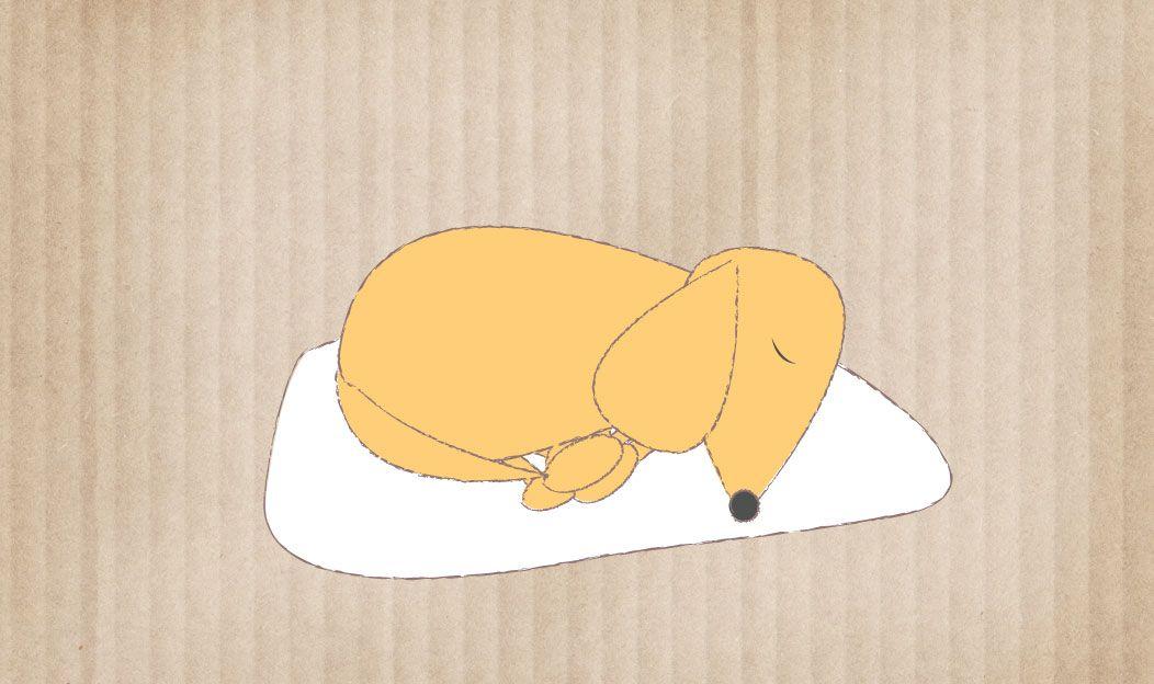 O cão em fase terminal