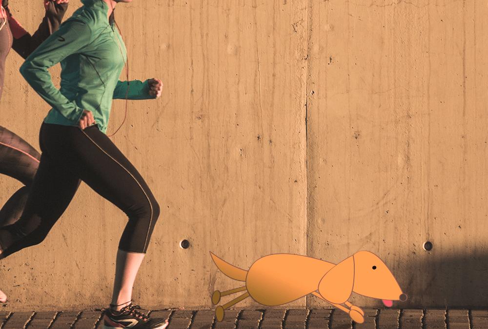 Ideias para se exercitar com o seu cão – com dicas de pré e pós-treino!