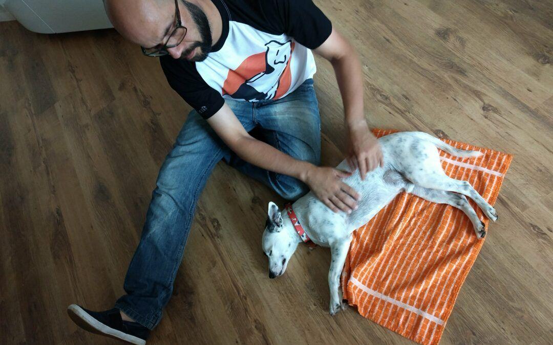 DEPOIMENTO | Jonas de Freitas, educador e comportamentalista canino