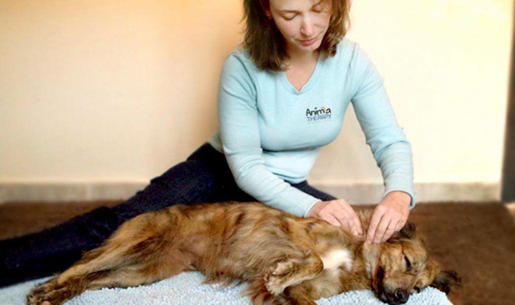 O novo cenário da massagem para cães no Brasil